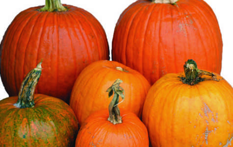 The incredible, edible pumpkin