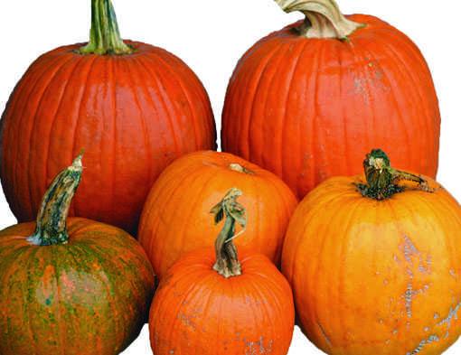 The incredible, edible pumpkin
